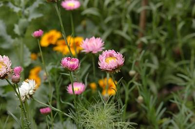 Garden Flowers: II