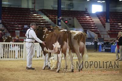 New York Spring RW HO Cows 15