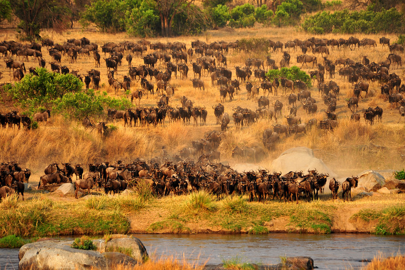 Africa 2010-068.JPG