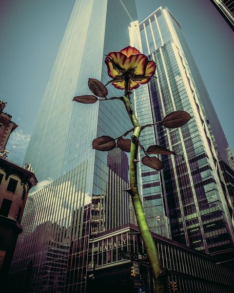 195 (7-24-19) Rose III Z Park flower-1-3.jpg
