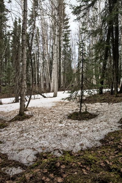 Forest Melting