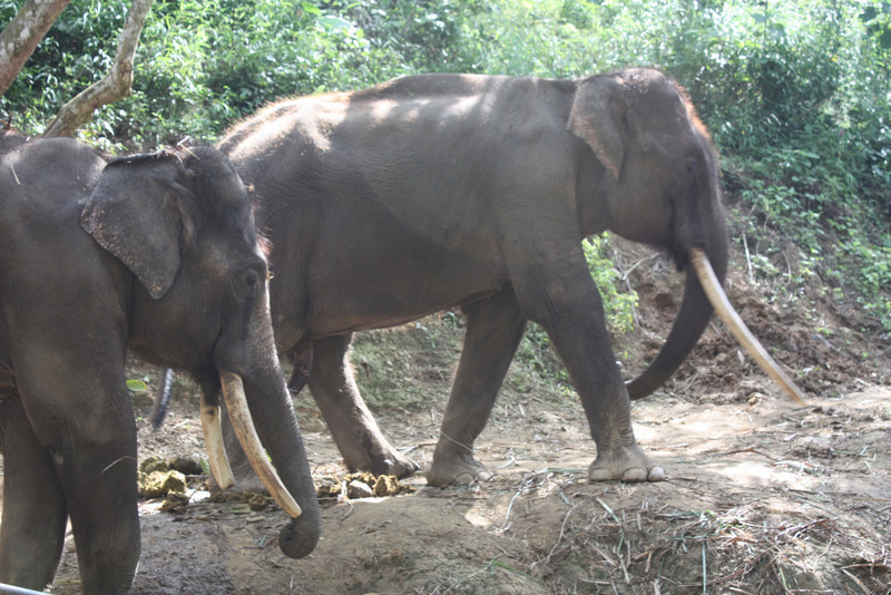 Jinghong, Wild Elephan Valley