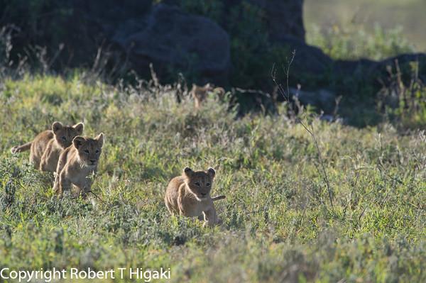 Tanzania-Ngorongoro Day  9