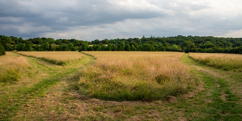 Fryent Country Park and Barn Hill