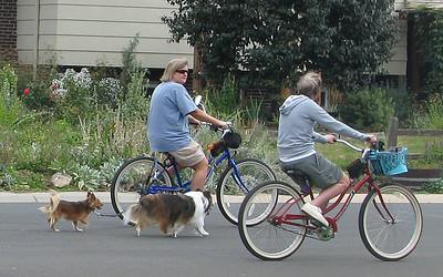 Bikers/dogs