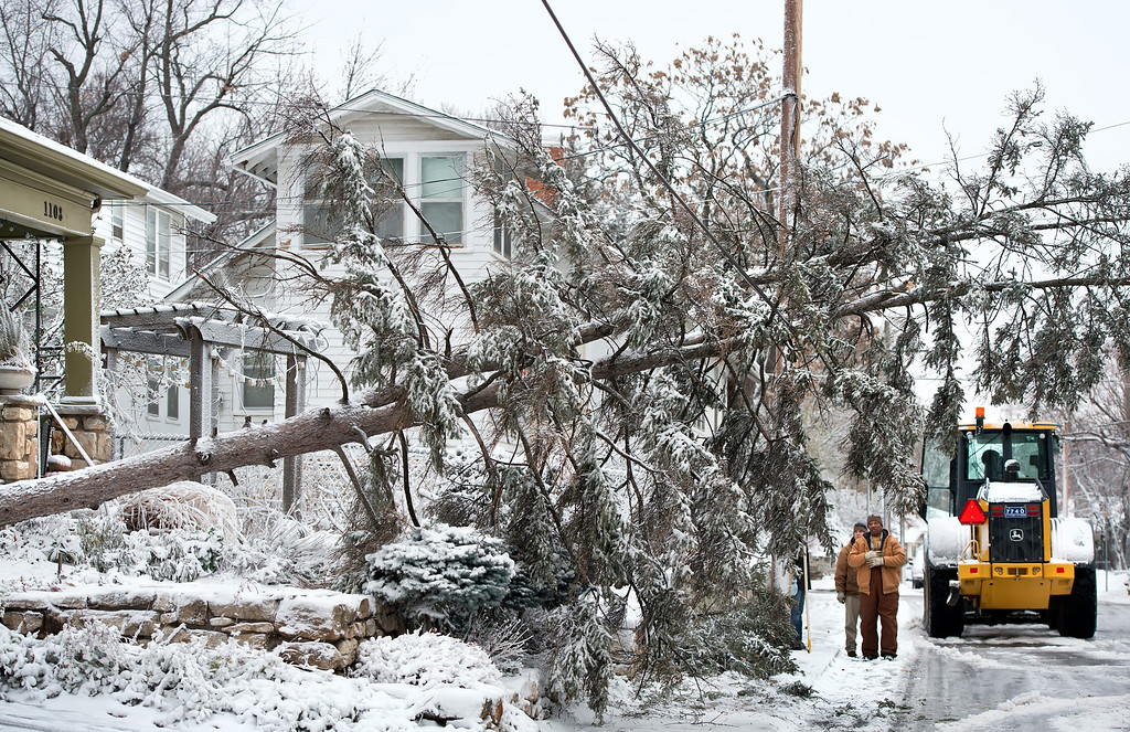 . Kansas City, Missouri city workers examine a fallen tree that landed on a telephone wire during snow and windstorm, Thursday, December 20, 2012, in Kansas City. (David Eulitt/Kansas City Star/MCT)