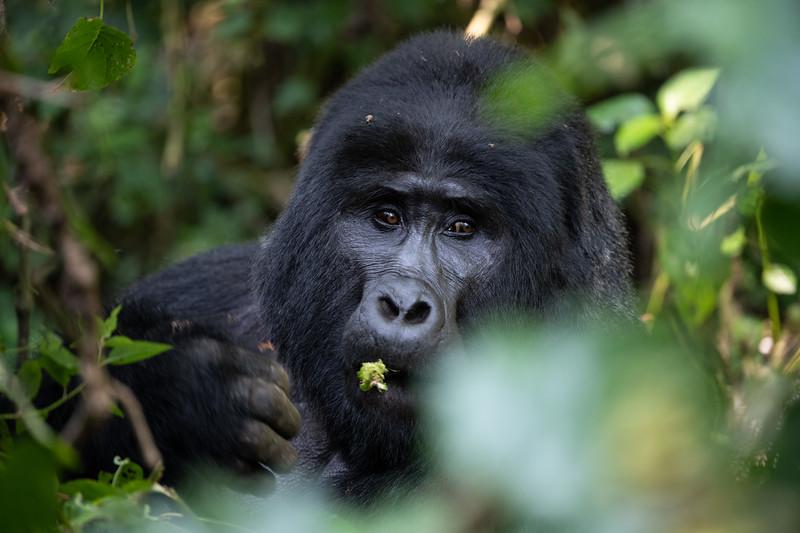 Uganda_T_Gor-1804.jpg