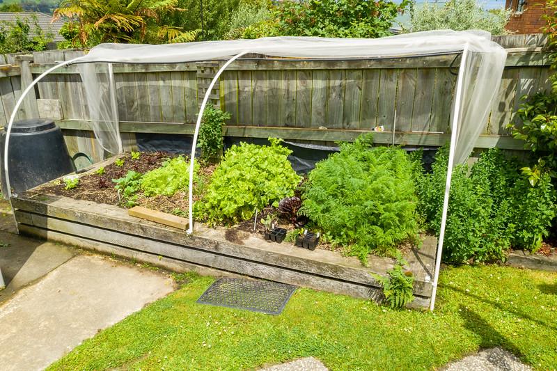 Garden091218-001.jpg