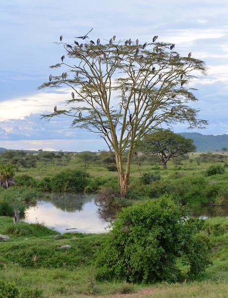 East Africa Safari 299.jpg