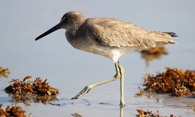 Bird 10-17-15 Port A 058.jpg
