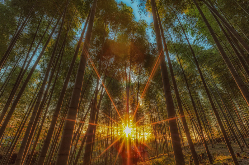 Bamboo sunrise