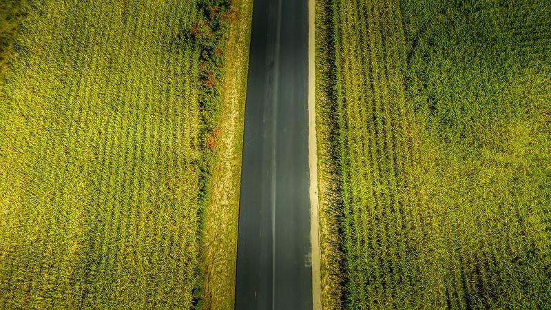 Corn Road.jpg