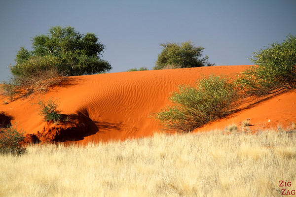 Longitudinal sand dunes of the Kalahari desert, Namibia