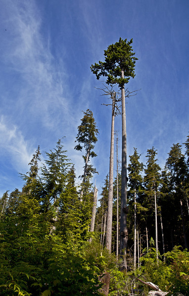 Scorned for Timber
