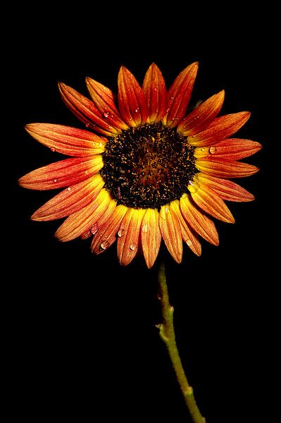 sun_002.jpg