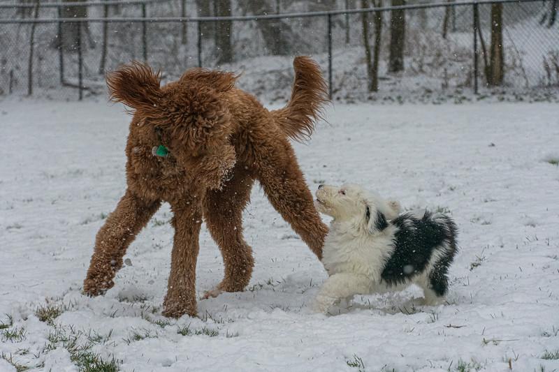 London-10weeks-Snow2.jpg