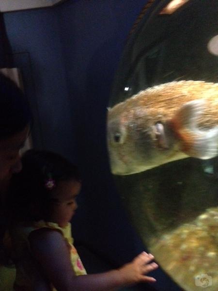 Weissfest 2014 - Staten Island Zoo 13.jpg