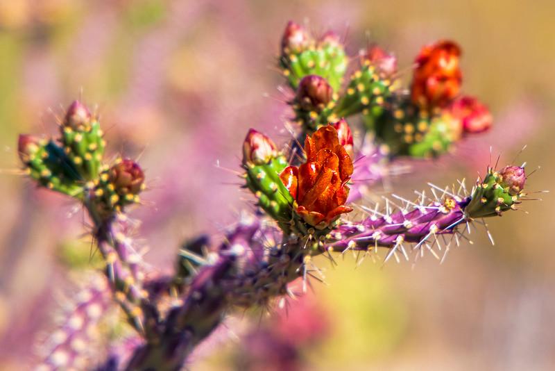 Multi Colored Spring
