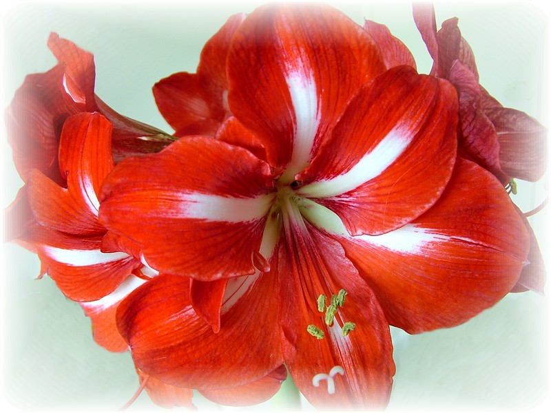 Flower 018.JPG
