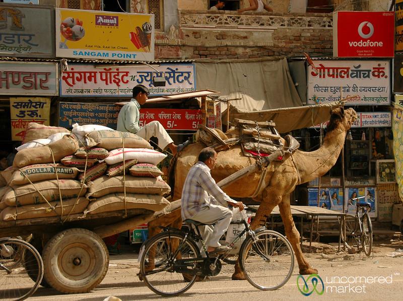 Camel Transport - Bikaner, India
