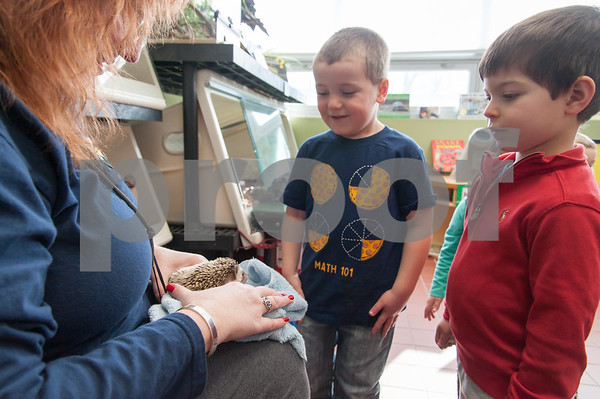 01/25/18 Wesley Bunnell | Staff Children were able to get an up close look at animals at Imagine Nation in Bristol on Thursday afternoon. During the 1:30pm show run by Karen Pac 5 year old Joey Beauchemin, middle, and 4 year old Manny Moreiras look down at Pinwheel the hedgehog.