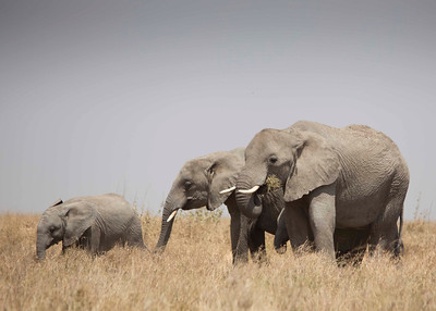 elephants_MG_6828