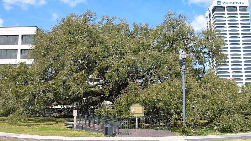 Treaty Oak Park