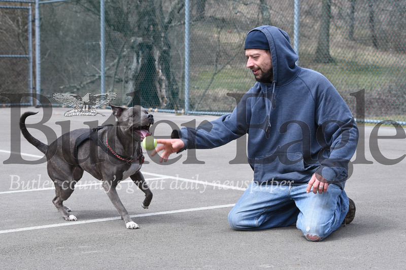Harold Aughton/Butler Eagle: Two-year-old, American Blue Nose Pitt Bull, Jemma, plays a game of keep away with her owners, Amber and Corey McFadden of Butler, Friday afternoon at the Butler Memorial Park.
