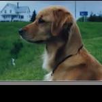 Shawnee Memories July 7, 2010