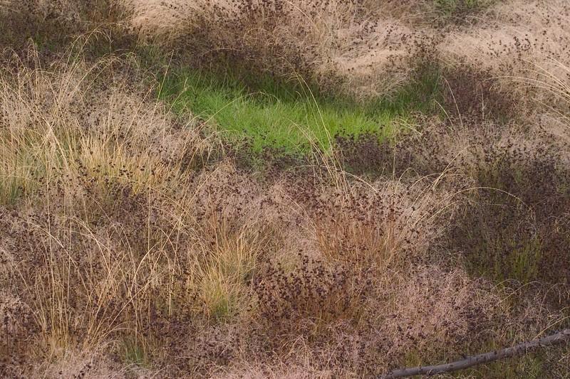 Green amongst Purple Yellowstone NP WY 766_6687.jpg