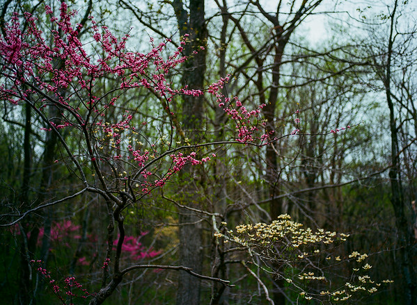 Unseen Spring