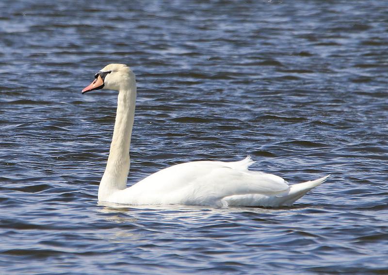swan 2020_edited-1.jpg