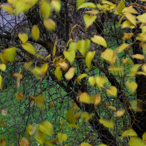 Dag_204_2012-nov-01_2162.jpg