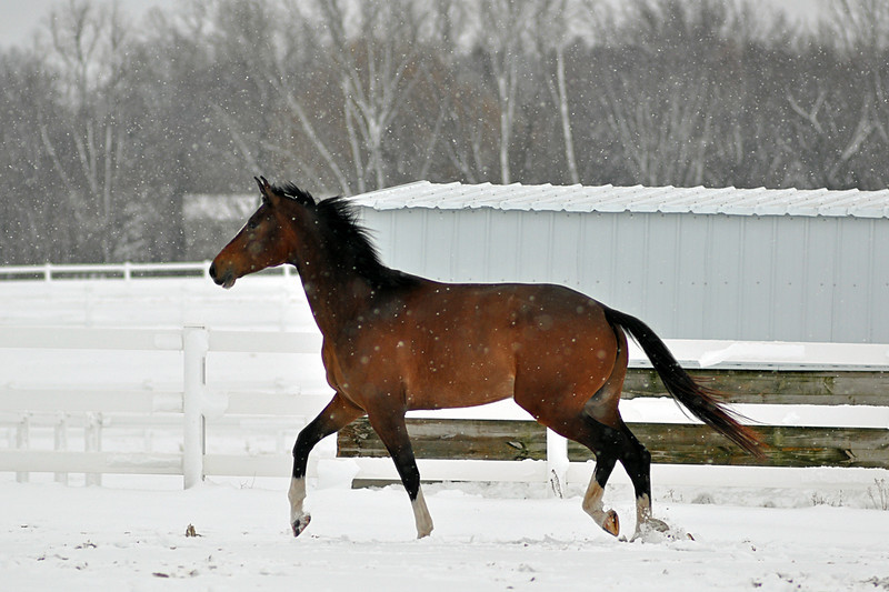 Snowy Dalanta 162 RETOUCHED.jpg