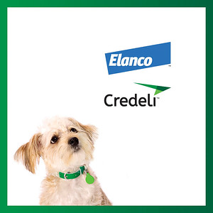 ELANCO CREDELI | Pet Vet South Ametica - 23-08
