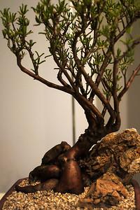 Cactus+Succulent Show 2010-12-04