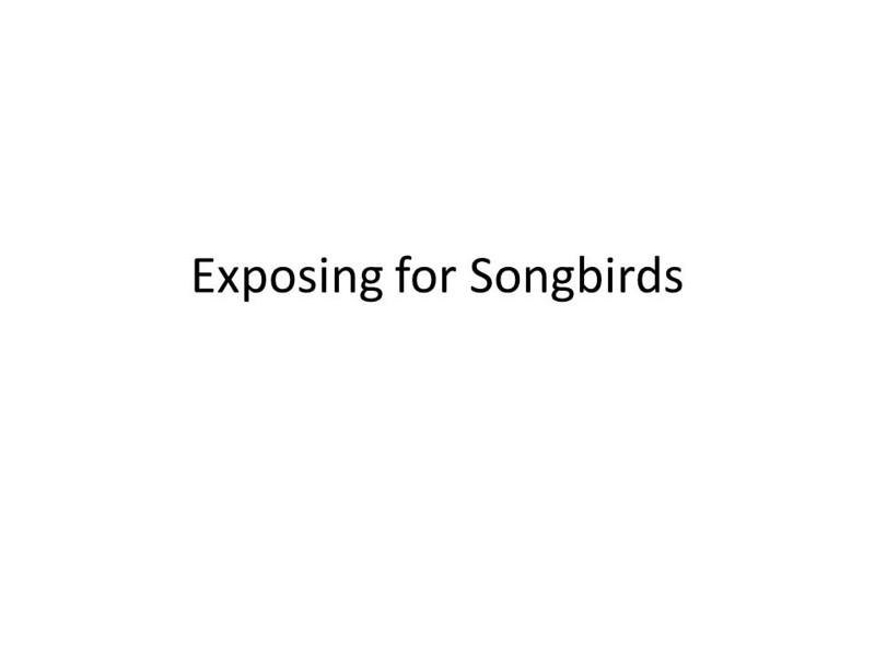 Exposing for Songbirds.jpg
