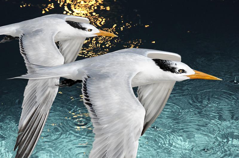 birdyfinall.jpg