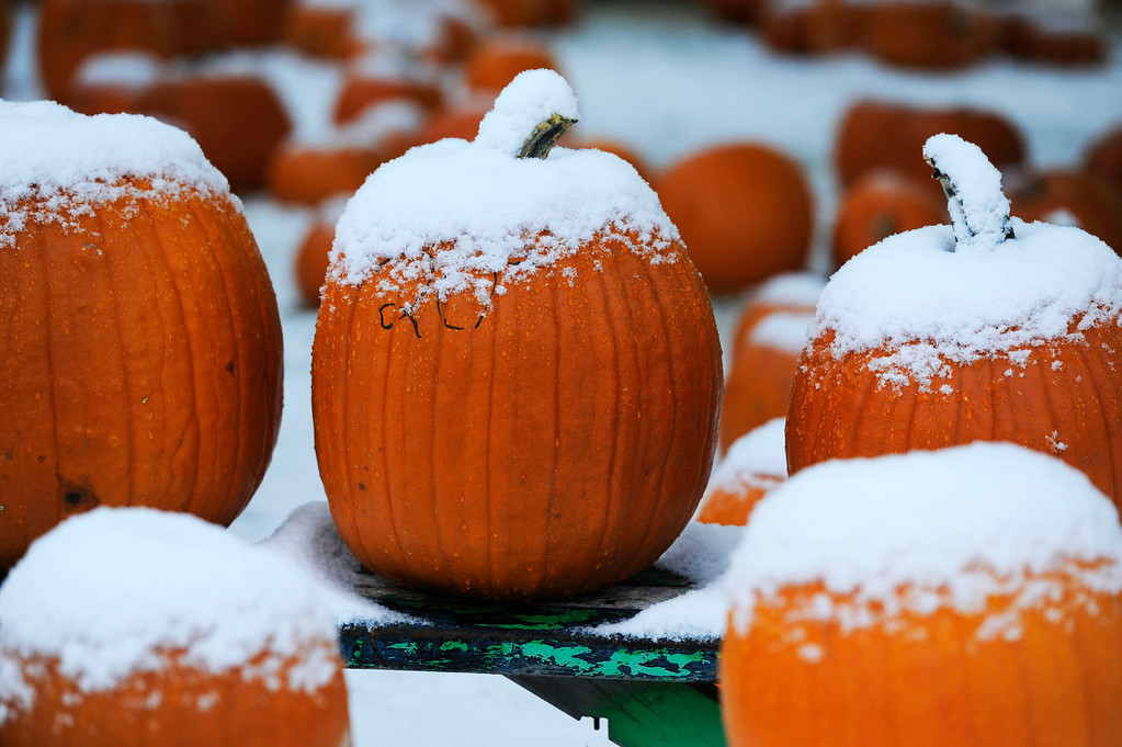 . Snow covers the top of pumpkins on sale for a fundraiser at the Grace United Methodist Church near Eudora St. and Yale Ave, Friday morning, October 18, 2013. (Photo By Andy Cross/The Denver Post)