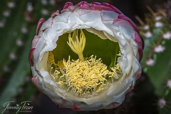 Cactus & Wild Flowers