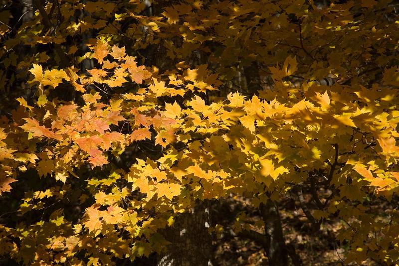 leaves_6303.jpg