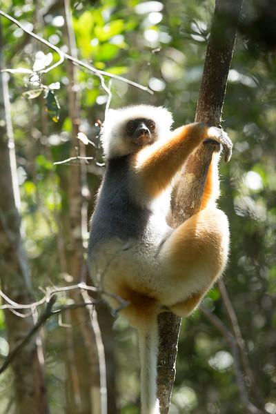 Madagascar_2013_FH0T9724.jpg