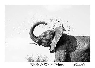 Black & White Prints