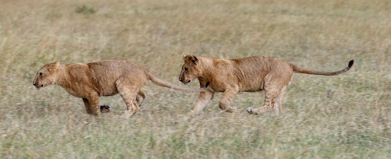 Kenya 2015-06081.jpg