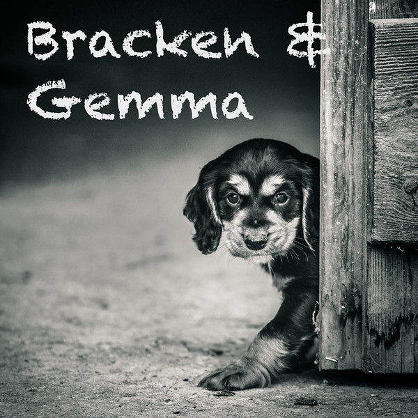 Gallery-Bracken-Icons.jpg