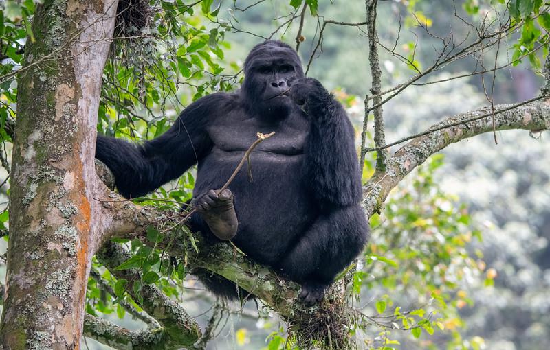 Uganda_T_Gor-2705.jpg