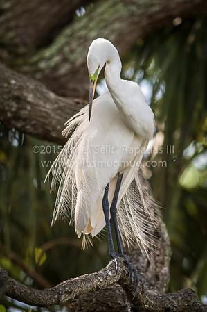 Florida Wildlife Shoot