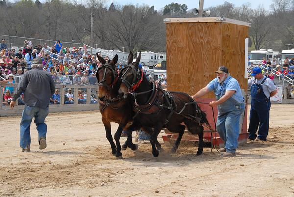 2013 Mule Pulling