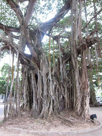 2010.12.28 - 30 Colombo