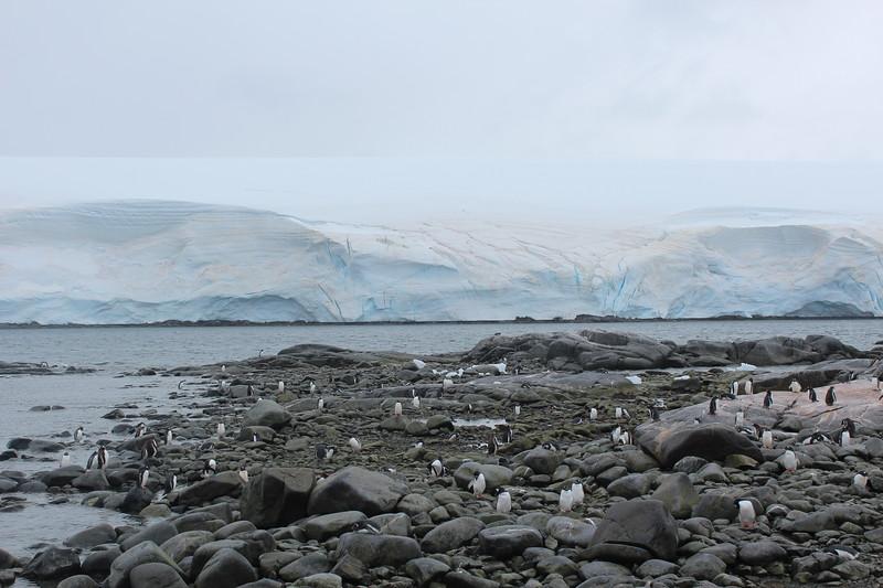 Antarctica 295.JPG